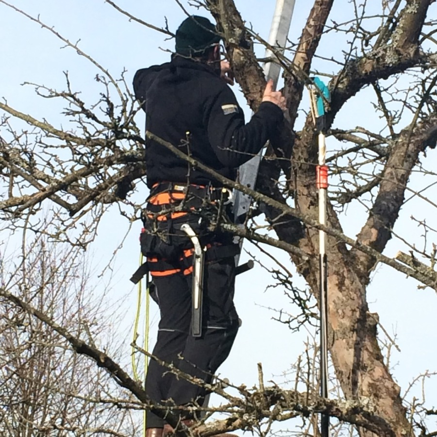 Sicherung bei Baumschnitt